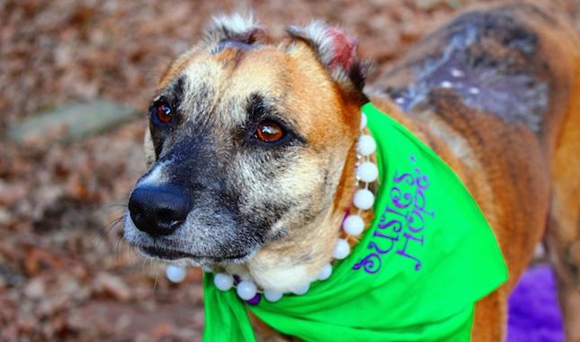 AHA Hero Dog Susie