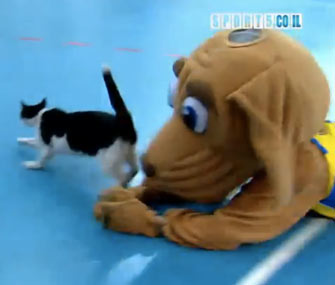 Dog mascot tries to tackle cat at basketball game