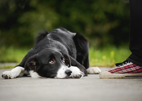 7 Signs of Submissive Behavior in Dogs — Photo Gallery