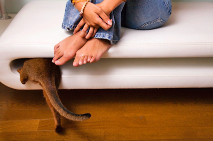 Cat going into small space under woman's feet