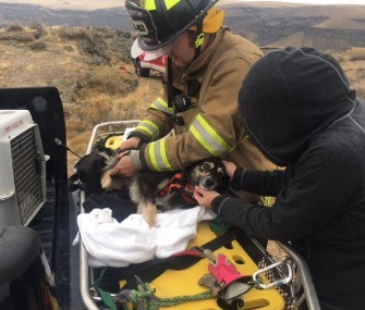 Firefighters in Idaho saved a dog who fell over a rock shelf on Sunday.