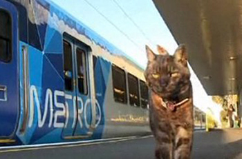 Cat walking near train
