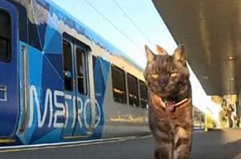 Cat walking near train