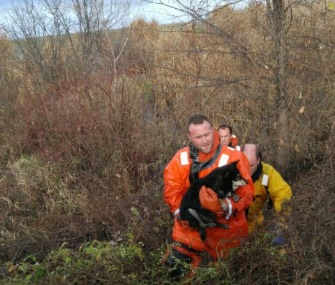 Eden Prairie, Minnesota, firefighters saved shelter dog Mister from a marsh by a frigid lake.