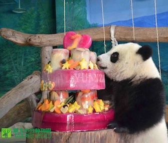 Panda cub Yuan Zian celebrates her first birthday at the Taipei Zoo.