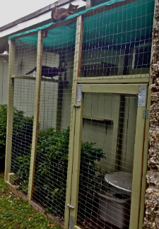 Dr. Patty Khuly's Catio