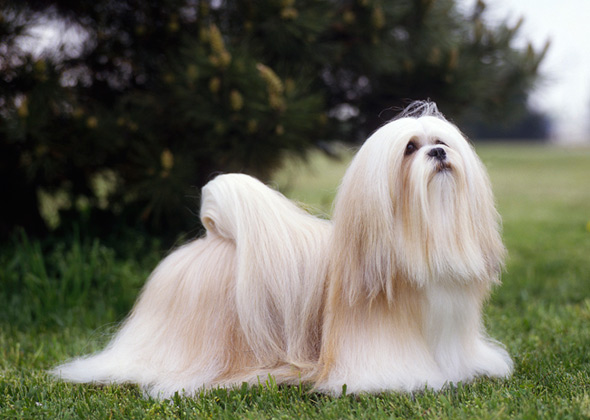 11 Low-Maintenance Dog Breeds That Are Easy to Groom