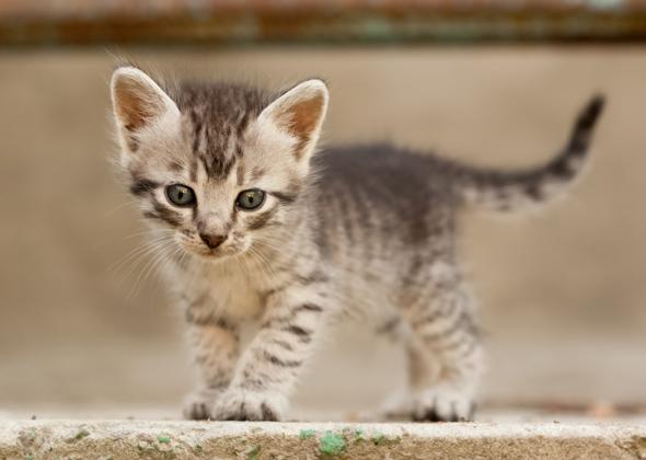 cute male kitten names 2015