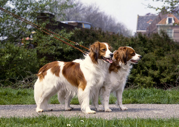 how to find rare dog breeds