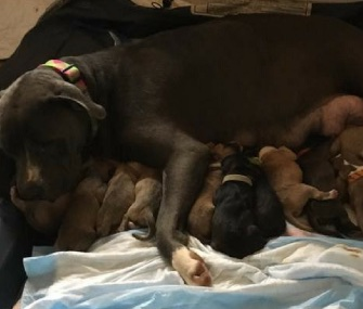 Molly and her 15 puppies are doing well.