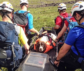 Woody the Spaniel was rescued on a stretcher after a 600-foot fall off a cliff in Wales.
