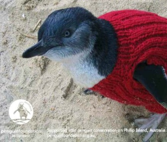 The Penguin Foundation is asking knitters around the world to make sweaters for its rescued penguins.