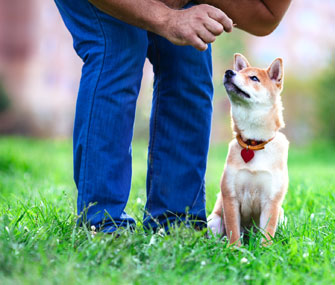 7 Tips for Training a Stubborn Dog