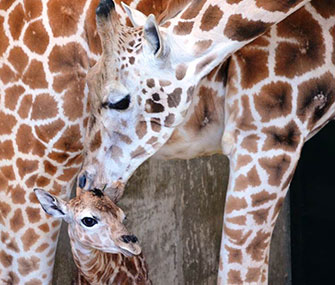 Baby Sandy Hope gets a kiss from her mom, Petal.