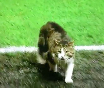 Cat on soccer field