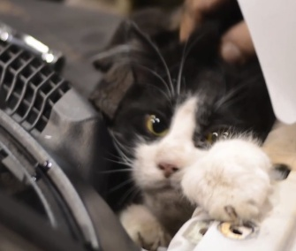 "Nicknamed ""Little Houdini,"" rescuers worked for an hour to free this cat from under a truck's hood."
