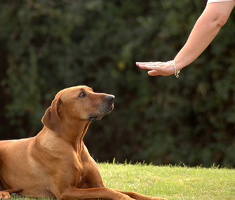 Is Your Dog Going Deaf or Blind? Teach New Command