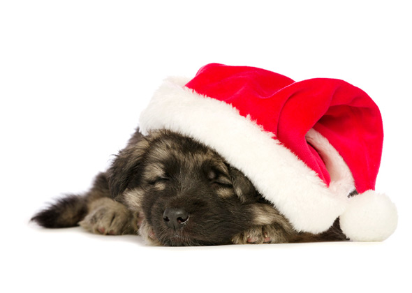 Christmas Hats For Dogs.15 Dog Breeds Wearing Christmas Outfits