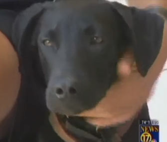 Prince, a Labrador Retriever puppy who wouldn't leave his dead mother's side, has found a forever home.