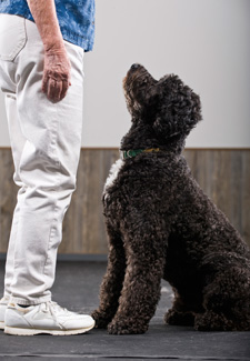 Adult Dog Training