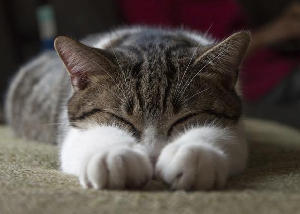 cat paws thinkstock 464891667 590sm12914 jpg