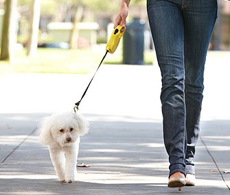 Dog on Retractable Leash