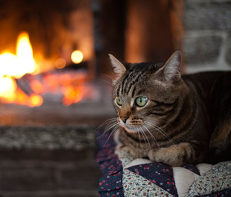 cat lying by a fireplace