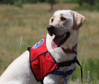 Cashew is one of the two therapy dogs being gifted to Newtown, Conn., by Camp Bow Wow.