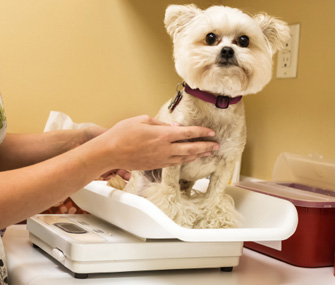 Cats and dogs who lose a dramatic amount of weight for no apparent reason need to see the vet
