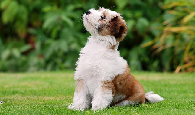 Good Scottish Male Dog Names