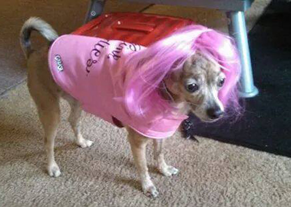 & Halloween Countdown: Our Favorite Dogs and Cats in Costumes