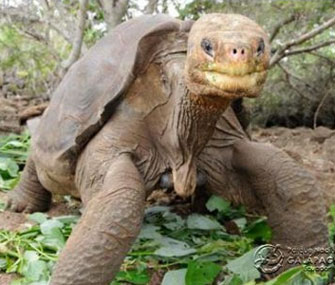 Lonesome George died Sunday at the Galapagos National Park.
