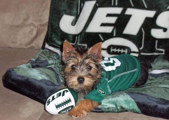 17 Dogs and Cats Who Are Ready for NFL Football