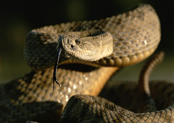 10 Snakes, Spiders and Other Creatures That Are Dangerous