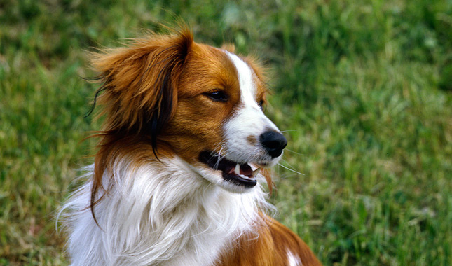 Best Breed Of Dog For Active Family