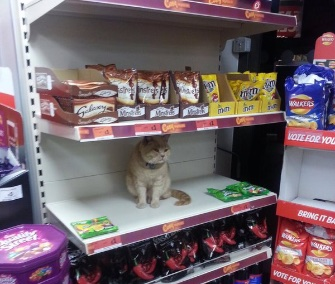 Olly the cat has make the sweets shelf at his local supermarket his favorite spot.