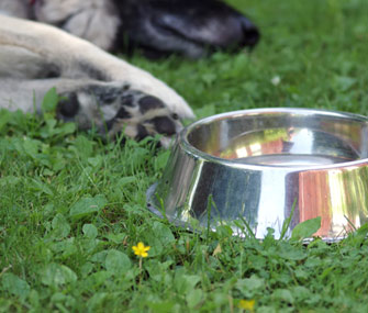 Dog and water dish