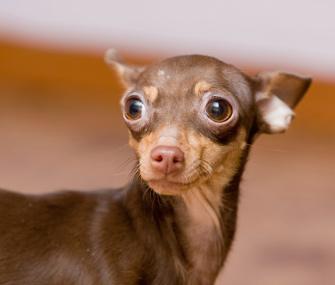 Skittish dog