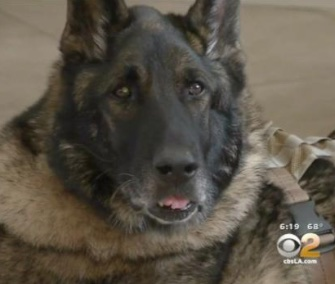 Sirius has retired with the family of his late Marine partner, Josh Ashley.