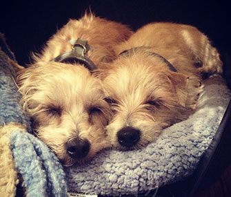 Actress Zooey Deschanel Tweeted this cute photo of her newly adopted dogs.