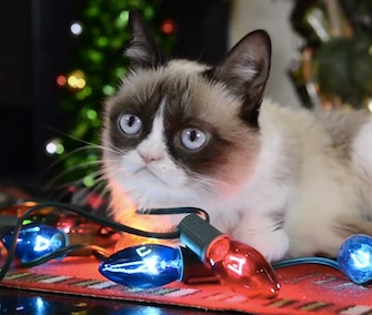 "Grumpy Cat and his famous feline friends star in ""Hard to Be a Cat at Christmas."""