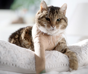 Injured cat wearing a cast