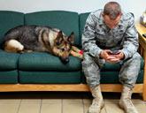 Canine PTSD
