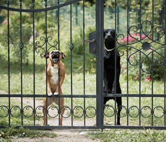 Dogs at Fence