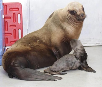 Mom Eden is bonding with her pup at the Alaska SeaLife Center.