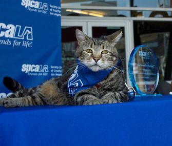 Tara the cat wins hero dog award