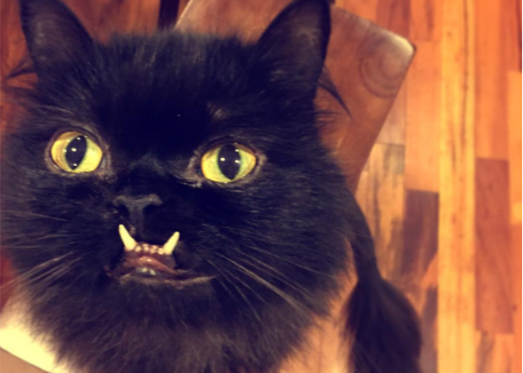 13 of Our Favorite Black Cats on Instagram