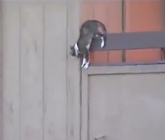 A cat jumps to safety from a burning a apartment building in Las Vegas.