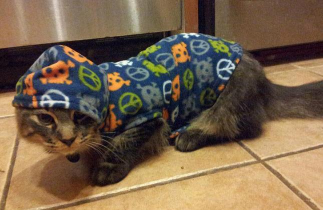 Cat in Blue Hoodie