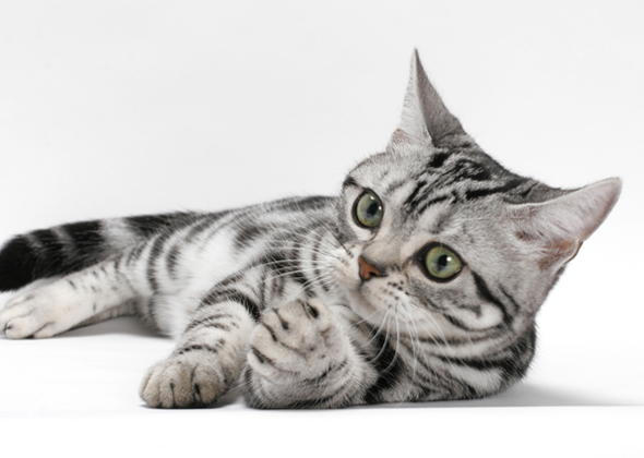 Best Cat Breeds for First-Time Owners